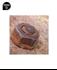 Imagen de Juego vasos impacto para tornillos dañados FORCE 912U3